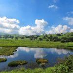 八島湿原3