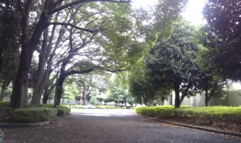 今日の淵野辺公園